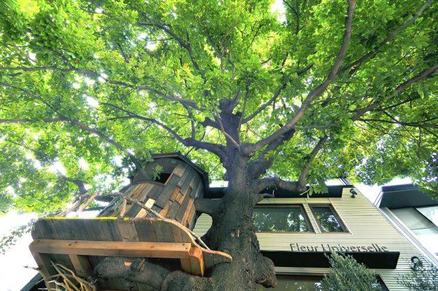 象征店家的树木红楠