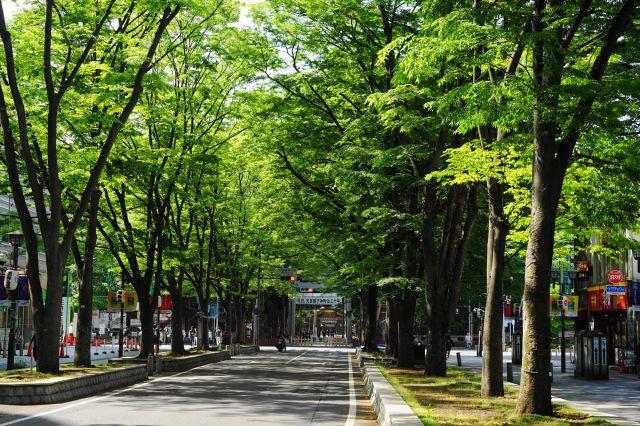 馬場大門櫸樹並木大道