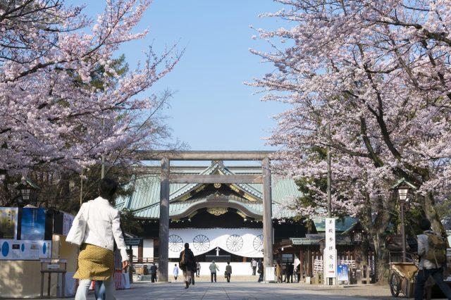 The Sakura of Yasukuni Shrine