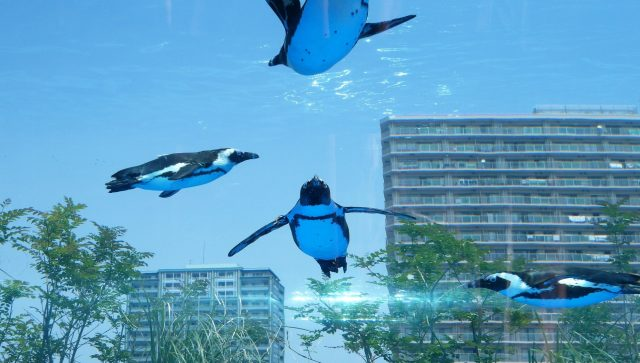 Penguins swimming through the city sky