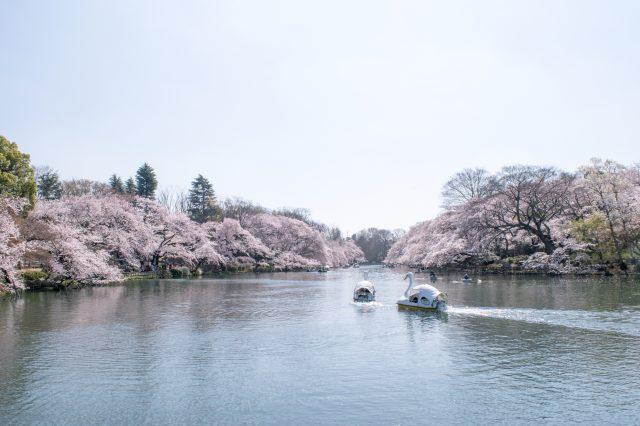 Inokashira Pond in the spring