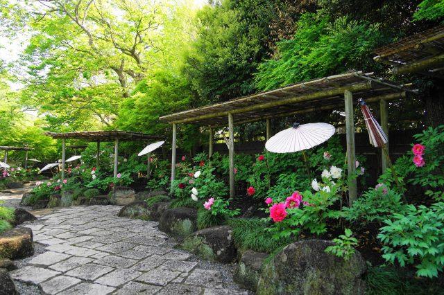 Shin'en Peony Garden