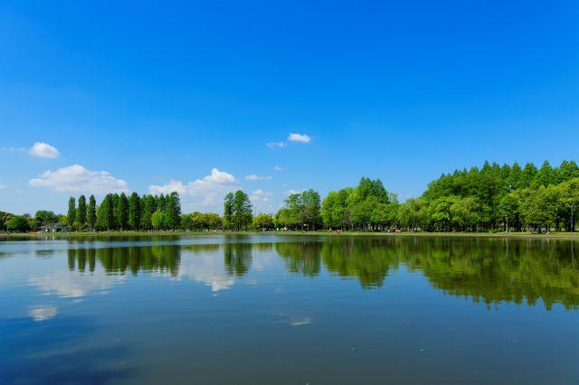 美丽的水乡景观