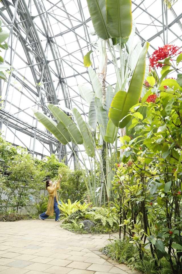 令人感到驚訝的巨大植物!