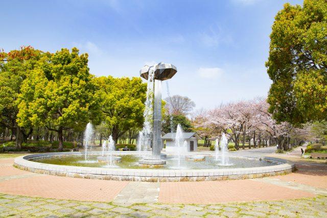 噴水池和櫻花長廊