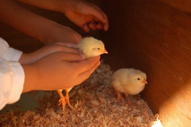 在好朋友廣場親手觸摸和擁抱小動物