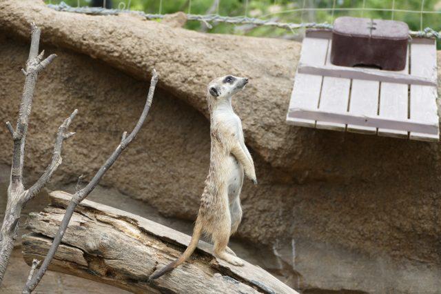 能欣賞到世界各地的動物
