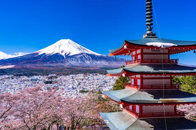 櫻花、五重塔和富士山共同構成的美景