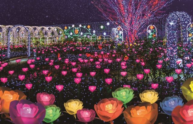 "Rose-themed lighting on show during ""The Garden of Illuminated Flowers"""