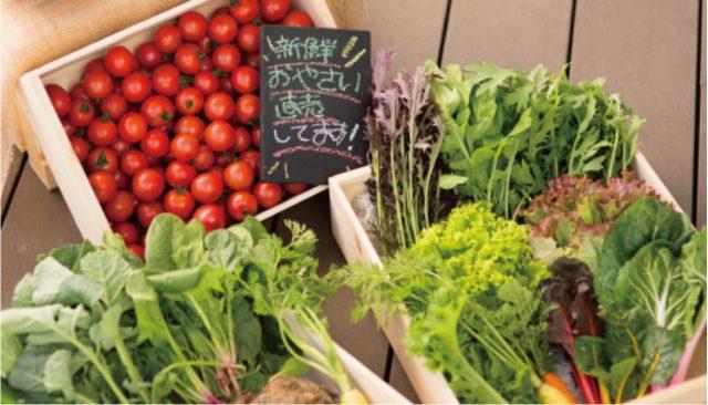 在餐廳內並設的土產店能買到最新鮮的蔬菜!