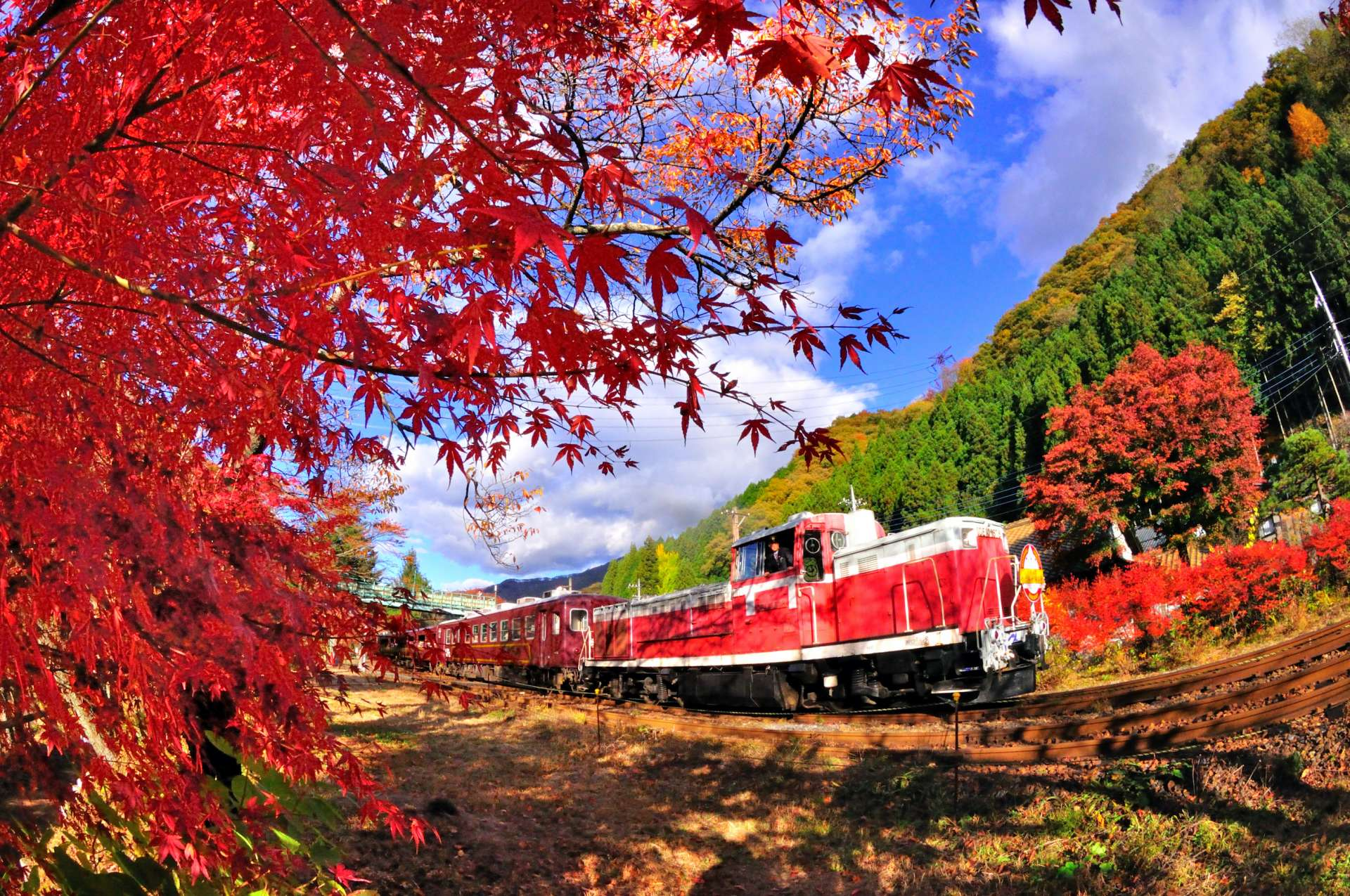 The contrast in autumn of the fall leaves and the blue sky is so beautiful in Watarase Gorge