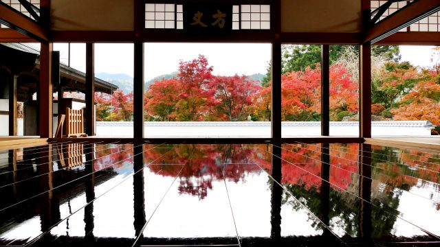"""The vivid red and yellow autumn leaves of the """"floor maples"""" shining on the floor."""