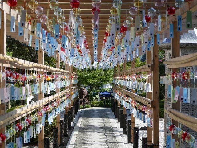 夏日的風鈴祭。參道兩側掛滿了寫有人們願望的風鈴