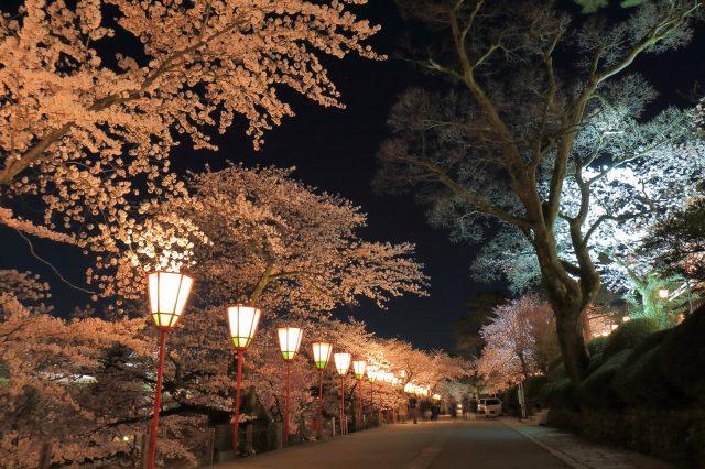 Kenrokuen spring light-up